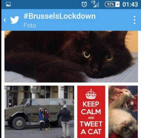 Brussels gatti