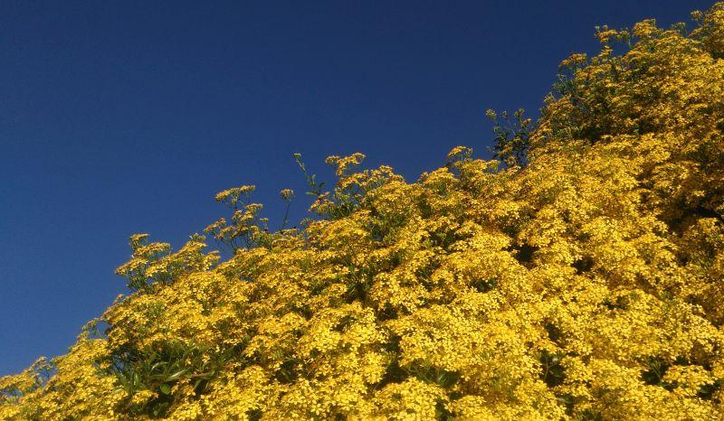 Costa Azzurra e gialla