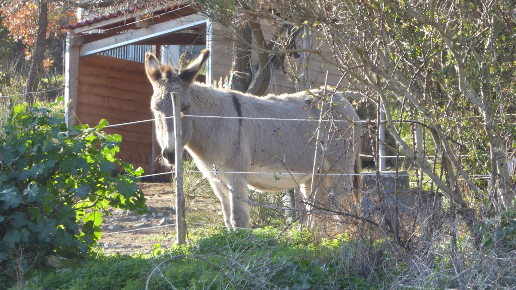 la donkey farm de la Coupiére
